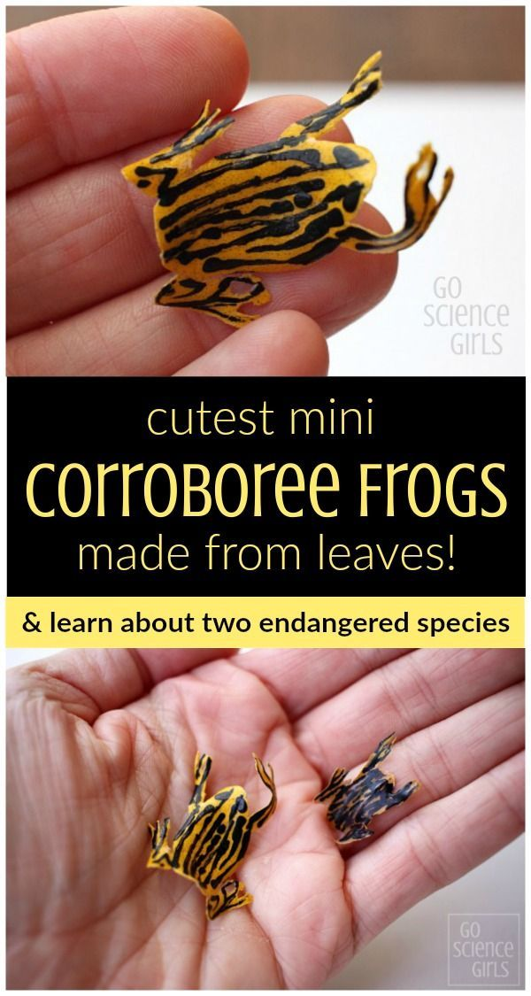 cutest-mini-corroboree-frogs-made-from-leaves-great-way-to-learn-about-two-endangered-species-go-science-girls