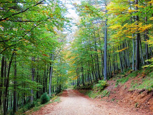 Boscos del Catllaràs #elbergueda #magradacatalunya
