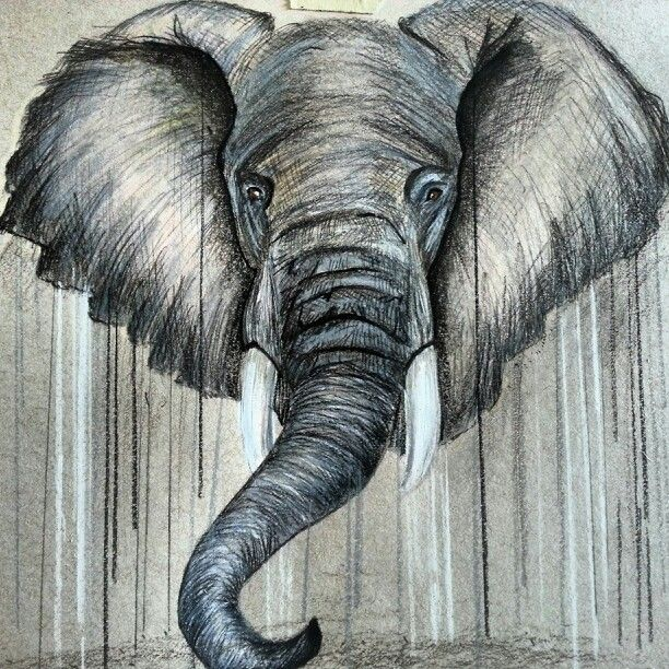17 Best ideas about Elephant Drawings on Pinterest | Drawings of ...