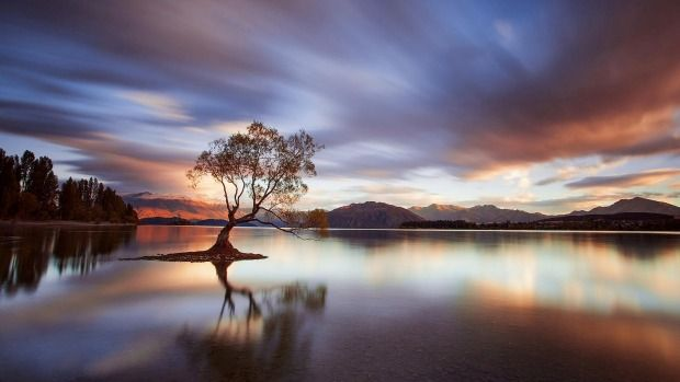 "That Wanaka Tree ...... ""It shows anything that is alive has a determination to live."""