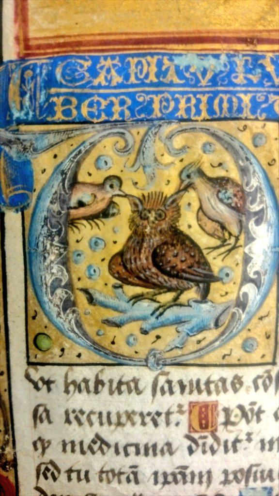 And here's some weird symbolism. Jays(?) nibbling at an owl's ear tufts. Or whispering advice? http://special.lib.gla.ac.uk/manuscripts/search/detail_c.cfm?ID=34292 …