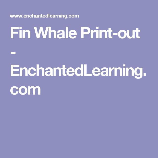 Fin Whale Print-out - EnchantedLearning.com