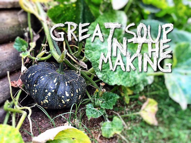 vegie garden pumpkins at Healesville Property