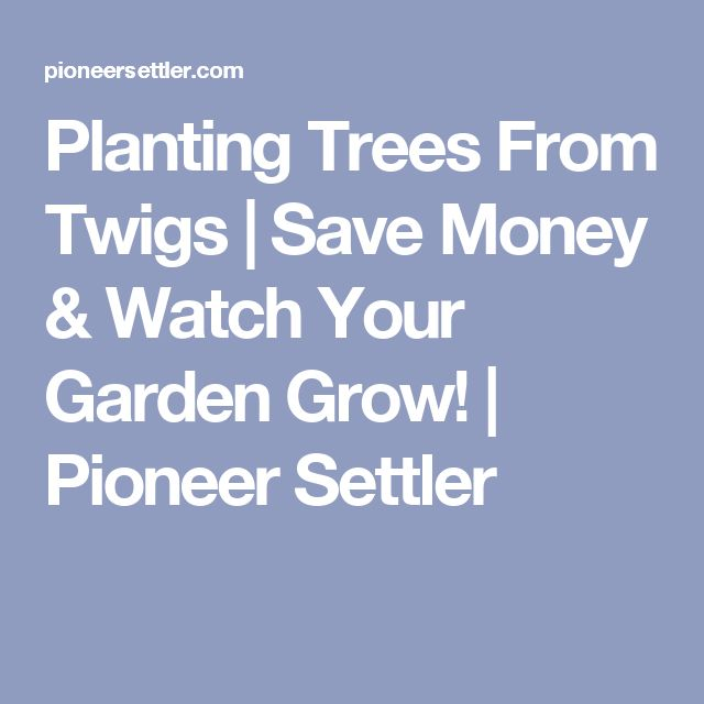 Planting Trees From Twigs   Save Money & Watch Your Garden Grow!   Pioneer Settler