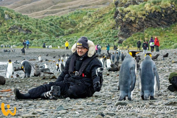 Auch mal Lust in Mitte einer Pinguin Familie zu sitzen?? Robert Wilpernig sitzt zwischen Ihnen als wäre es das normalste der Welt! #tauchreisen #wirodive #robertwilpernig #erlebnisreisen #love #sonne #kalt #cute #lebedeinleben #antarktis