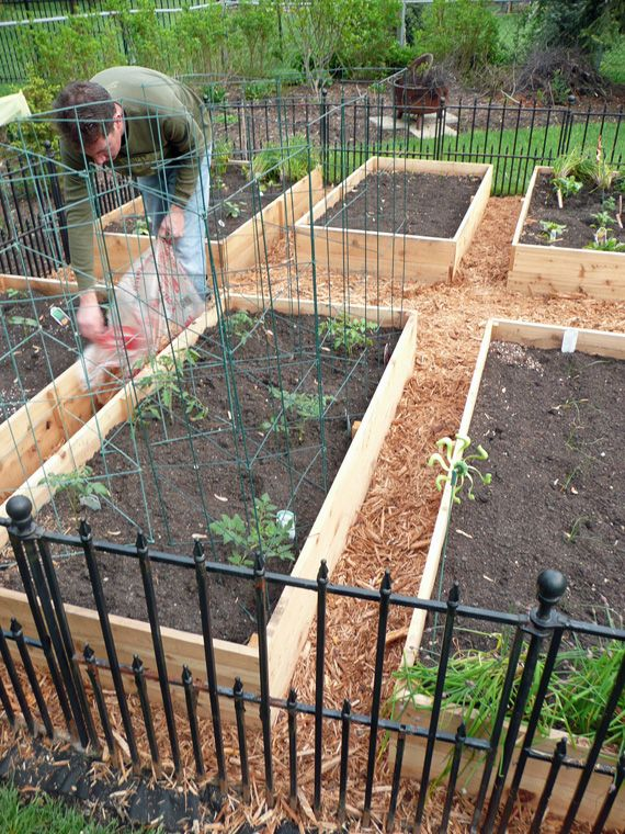 Vegetable garden box diy gardens raised beds and the box for Vegetable bed ideas
