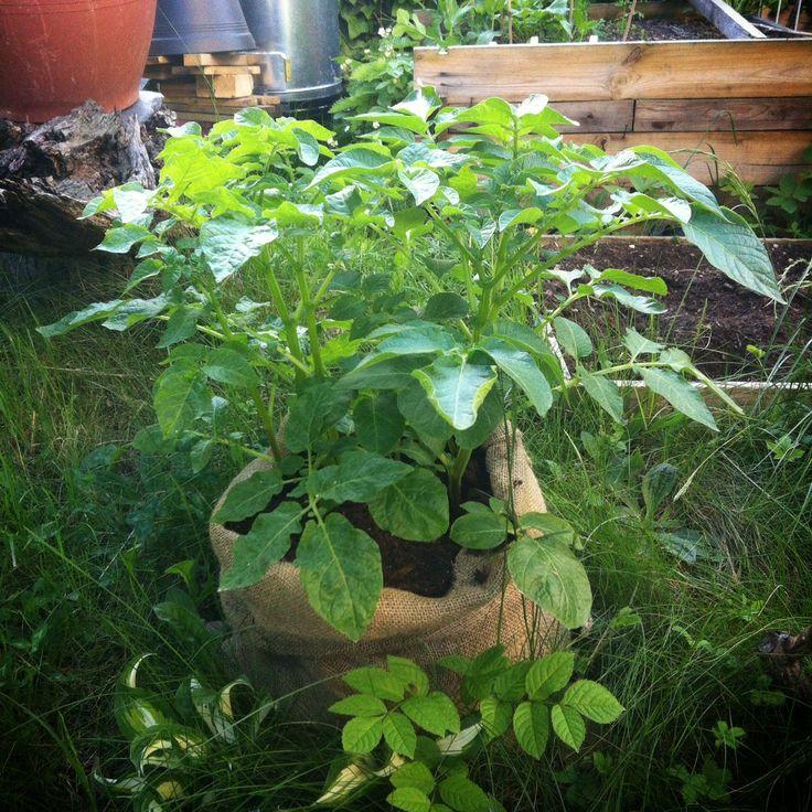 7 tipů jak rozjet jedlý balkon — optimisticky, lenivě a zeleně    Cuketka
