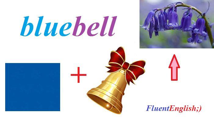 blue + bell = bluebell! (колокольчик, пролеска)