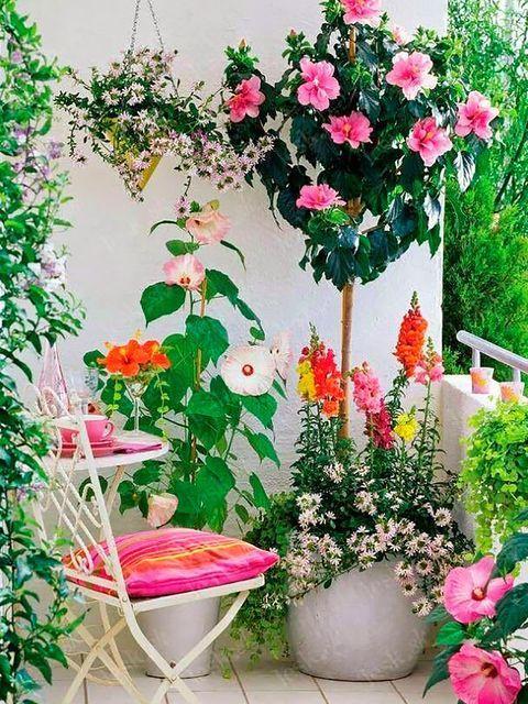 Terrazas diminutas que enamoran Td Garden, Balcony Garden, Spring Garden, Small Balcony Decor, Balcony Design, Garden Design, Balcony Ideas, Bamboo Plants, Indoor Plants