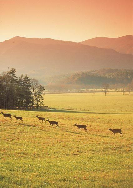 Cades Cove, Tennessee In the Great Smokey Mountains. So historic with original cabins, stores and wildlife. Preserve