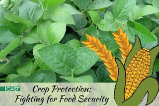 Crop Protection: Fighting for Food Security