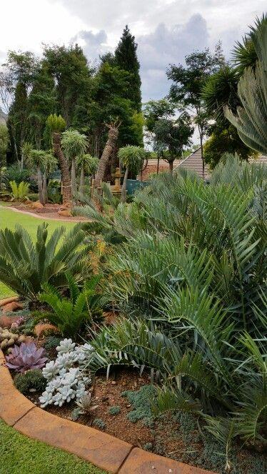 Cycad garden April 2015