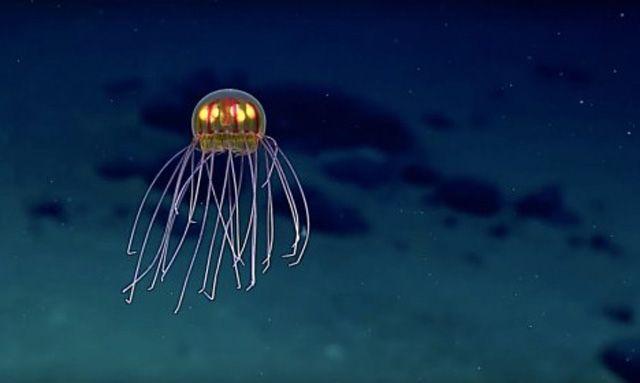 Die Kamera eines Unterwasserapparats der Nationalen Ozean- und Atmosphärenbehörde der USA hat am Boden des Marianengrabens eine Vielzahl bisher unbekannter Kreaturen entdeckt. Die Wissenschaftler w…