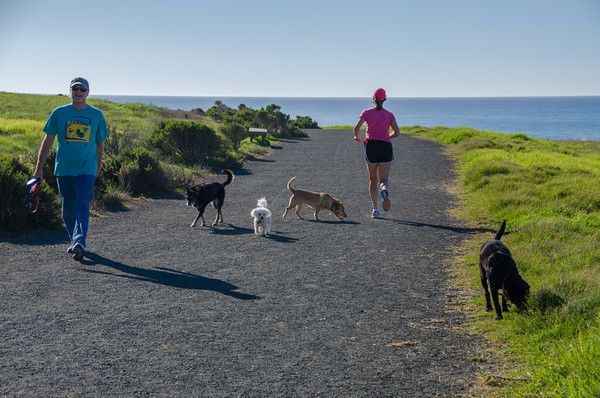 56 best cambria images on pinterest california coast for Pet friendly hotels near hearst castle