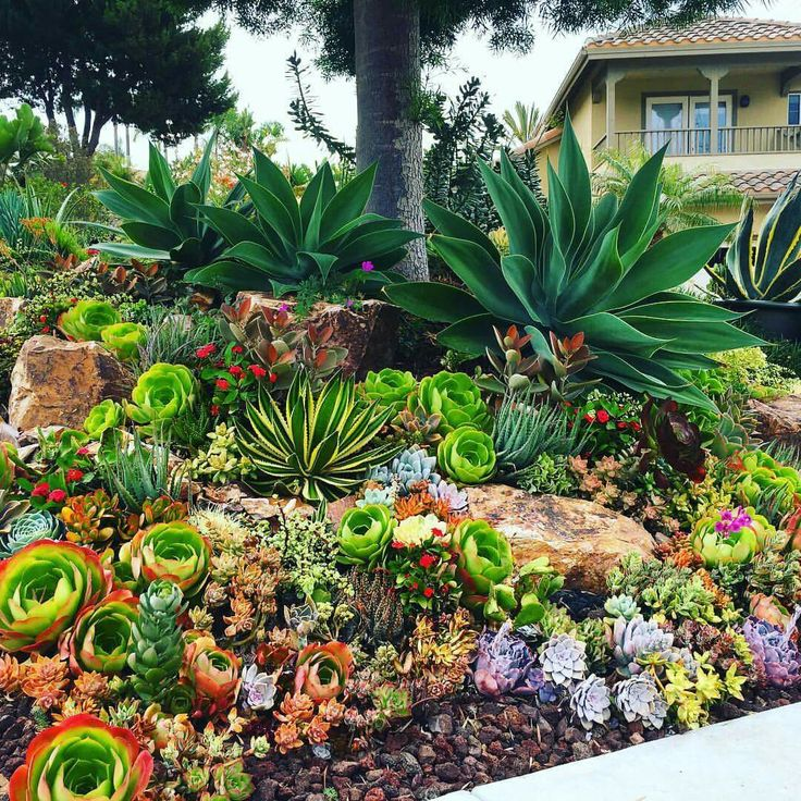 beautiful succulent garden probably something i would have in the front yard