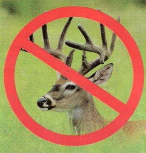 18 Best Zone 8 Deer Resistant Plants Perennials Images On