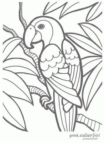 dover coloring pages exotic flowers - Pesquisa do Google