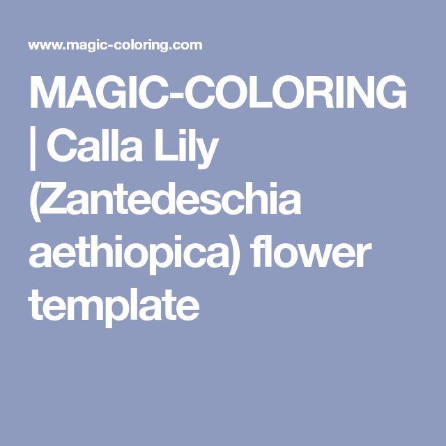 MAGIC-COLORING | Calla Lily (Zantedeschia aethiopica) flower template