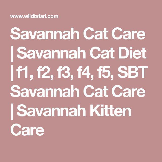 Savannah Cat Care | Savannah Cat Diet | f1, f2, f3, f4, f5, SBT Savannah Cat Care | Savannah Kitten Care