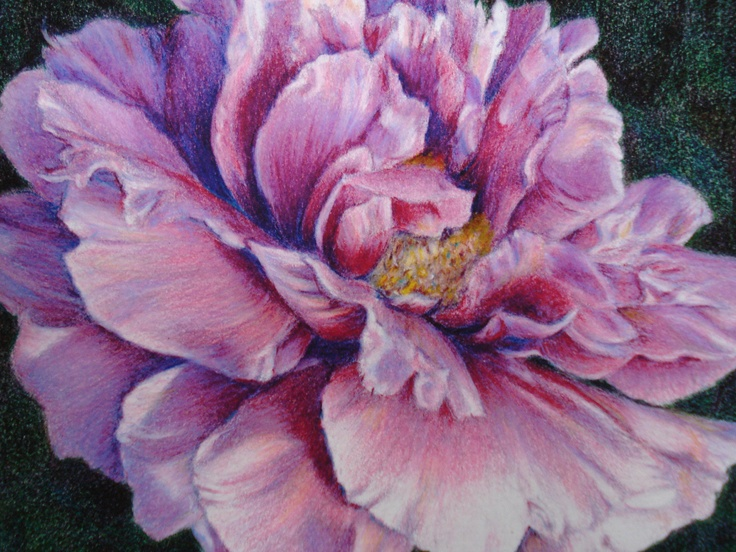 Caryn Coville colored pencil drawing   Pencil Drawings ...  Caryn Coville c...