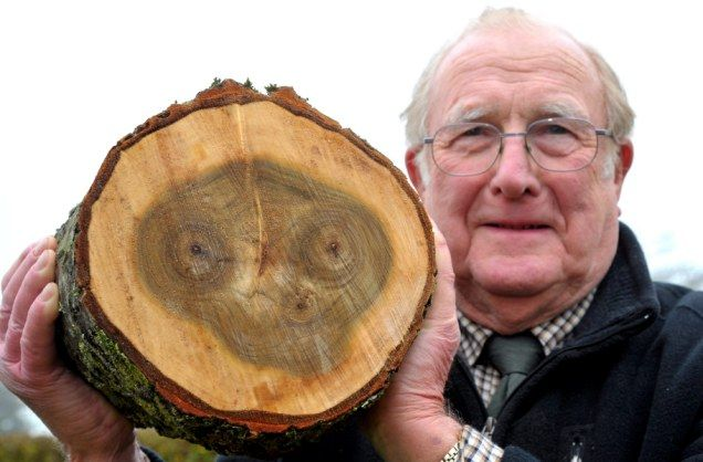 Have you twigged who it is yet? Face of ET found in tree trunk by wood-chopping OAP  http://www.dailymail.co.uk/news/article-2114219/Face-ET-tree-trunk-wood-chopping-pensioner.html?ito=feeds-newsxml