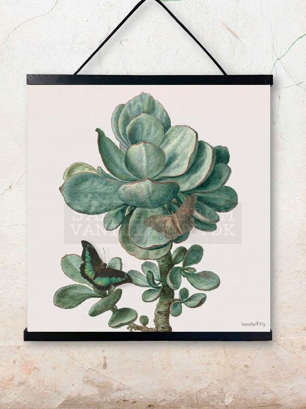 POSTER FROM VANILLAFLY.DK PCSXL13 SUCCULENT 50X50 - wallhanger is sold separately