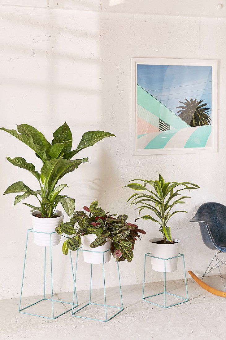 Best 25 Indoor Plant Stands Ideas On Pinterest Indoor