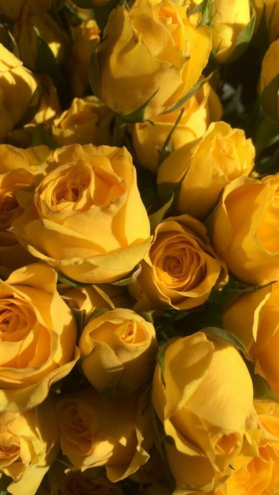 Yellow roses Yellow aesthetic Yellow roses