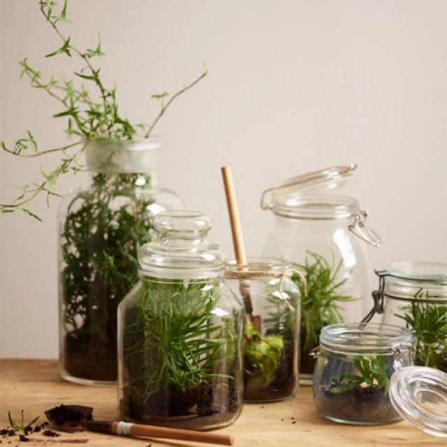 les 25 meilleures id es de la cat gorie terrarium bocaux sur pinterest pot ma on plantes. Black Bedroom Furniture Sets. Home Design Ideas