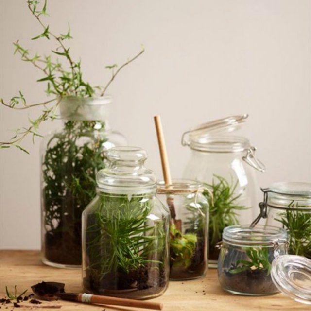 Des terrariums dans des bocaux en verre