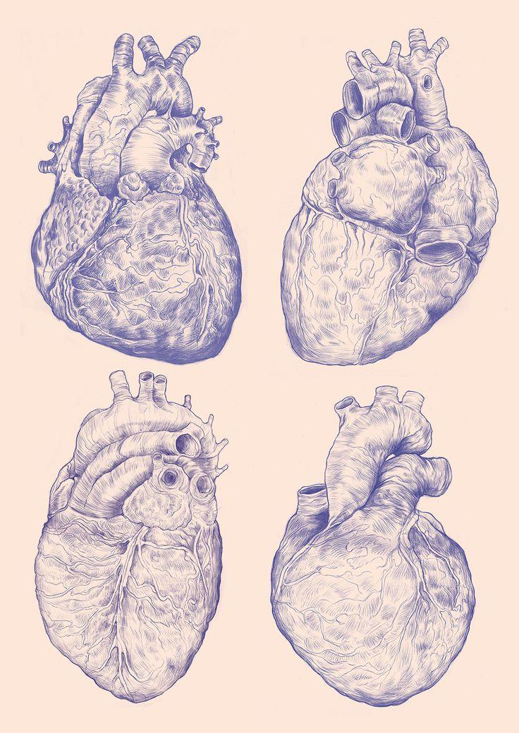 The anatomy of the Human Heart. | ART | Pinterest | Human heart ...