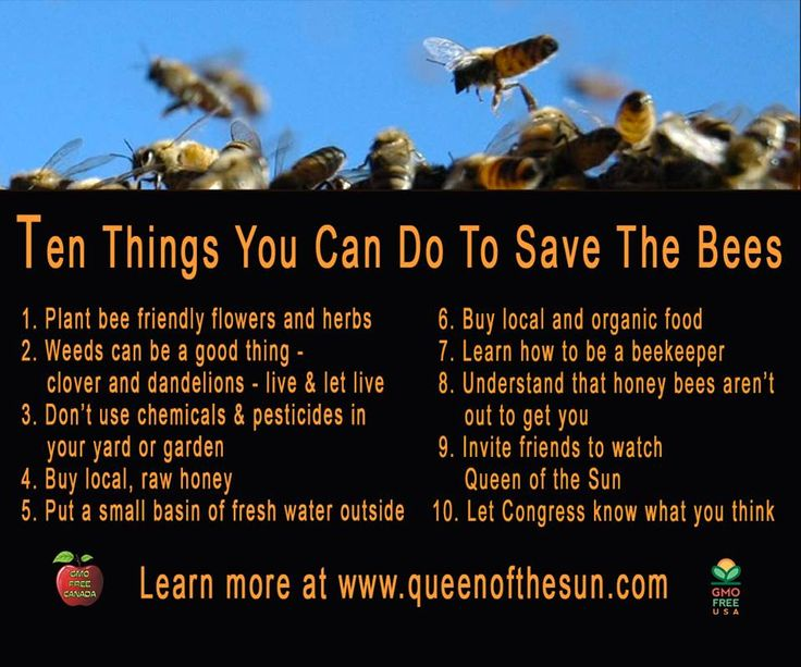 Ten Things You Can Do to Save the Bees