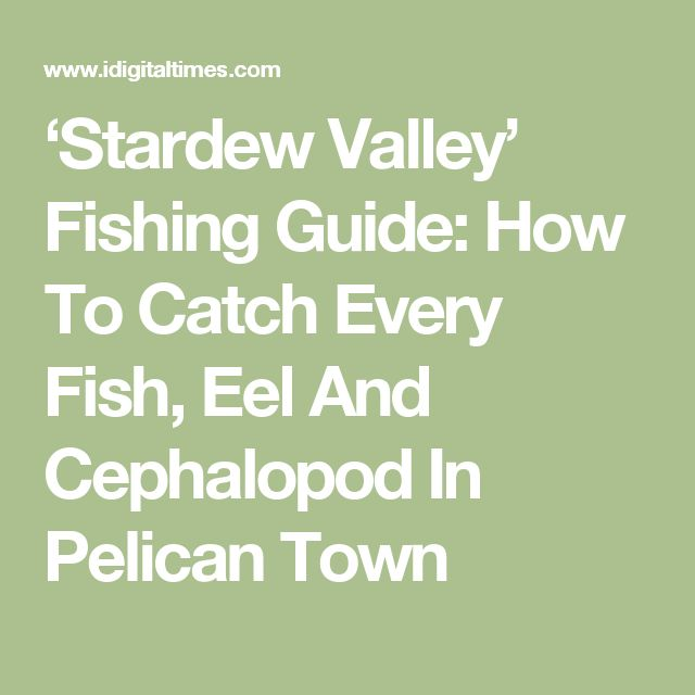 'Stardew Valley' Fishing Guide: How To Catch Every Fish, Eel And Cephalopod In Pelican Town