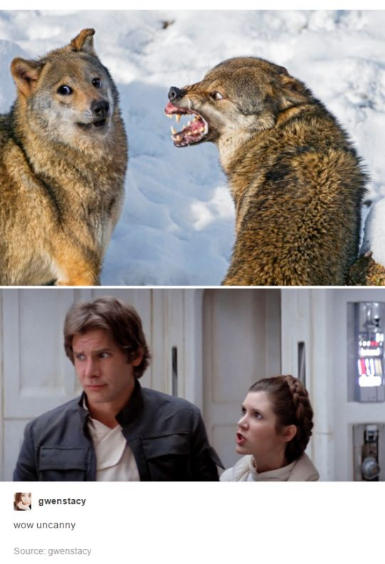 I don't if I should pin it on Star Wars or on Dogs. I srsly have no idea. I'll probably put it in Star Wars