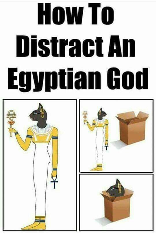 How to distract an Egyptian God and like OMG! get some yourself some pawtastic adorable cat shirts, cat socks, and other cat apparel by tapping the pin!