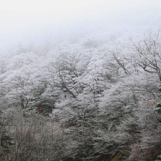 【haiirototoro】さんのInstagramをピンしています。 《〜7年前の立冬のころに〜 霧氷の森 いつまでも みとれてしまいました  さむいところは すきじゃないです  だから ここなん年か 霧氷とか雪とか みにいってないけど  この冬は どっかにいってみようかな  #大台ヶ原 #大台ケ原 #oodaigahara #霧氷 #rime #hoarfrost #forest #樹氷 #霧 #fog #森 #forest #よしくま #冬 #winter #上北山村 #kamikitayama #奈良 #nara #japan》