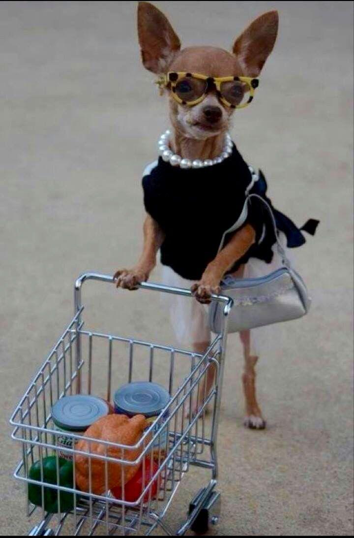 Retro shopper chihuahua makin' groceries
