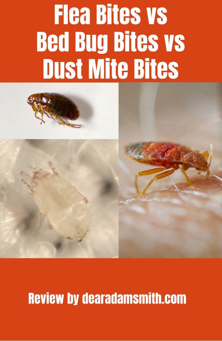 Flea Bites Vs Bed Bug Bites Vs Dust Mite Bites Dust Mites Bites
