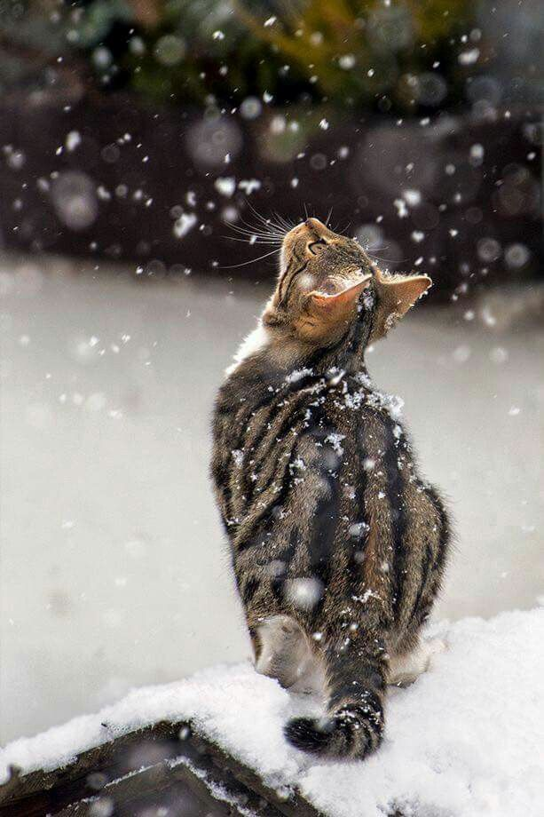 Snow + Cat #cat #love #animal