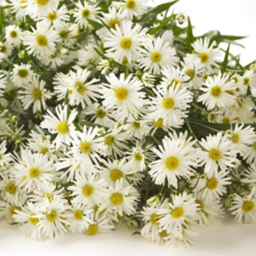 Find This Pin And More On Flowers Their Meanings