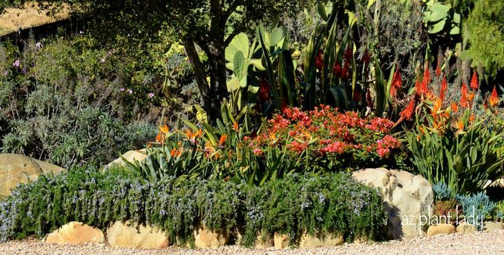 drought tolerant gardens | Drought-Tolerant Gardens: Ugly or Beautiful? - Birds and Blooms