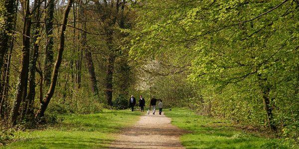 Foresta nazionale di Meudon.9 laghi e 1100 ettari di verde incontaminato da percorrere a piedi, in bicicletta o a cavallo.