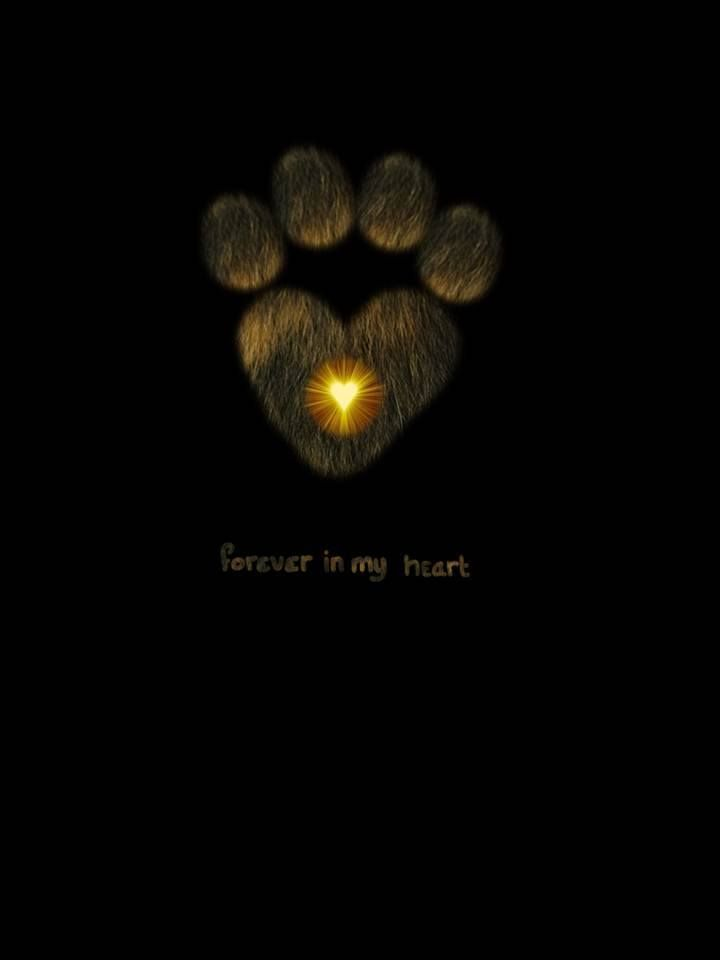 Samhain is a time to remember all of your pets who have passed on too.