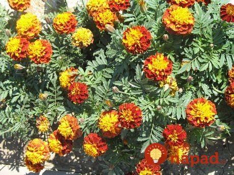 záhrada screenshot