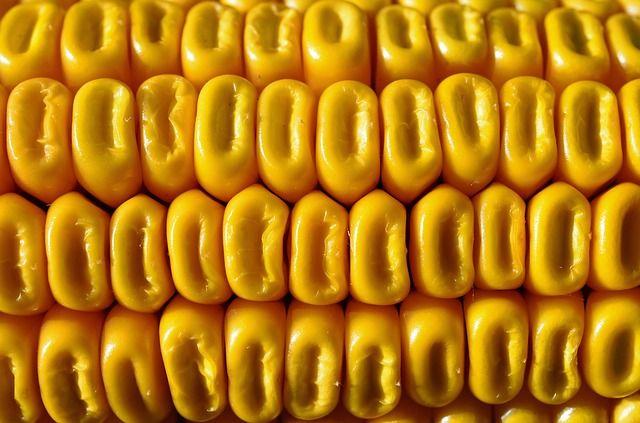 El maíz es nutritivo y una guarnición idónea para la carne en las dietas sin gluten #gastronomía