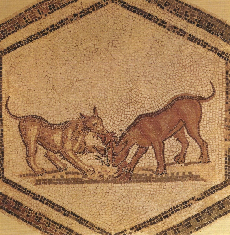 251 Best Roman Dogs Images On Pinterest Fresco Ancient