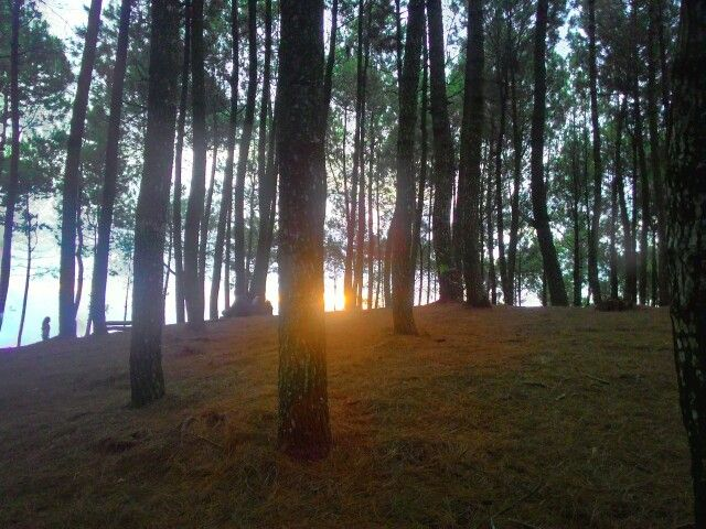 Almost sunset at pine forest. Bukit Moko, Bandung, Indonesia Taken with : Asus ZenFone 5
