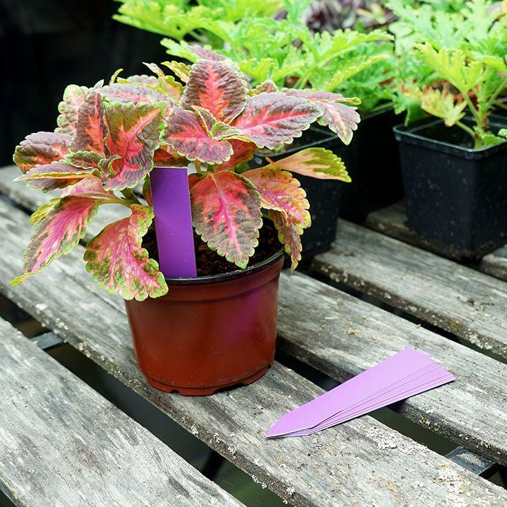 Plantetiketter 20-pack, lila #Plantetiketter #Växtetiketter