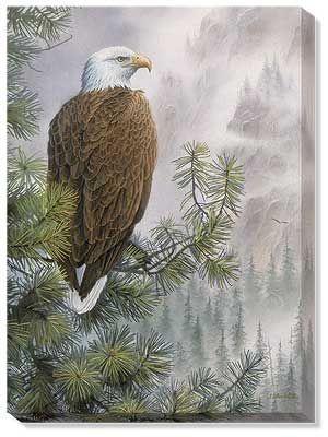 High Mountain Sentinel – Bald Eagle