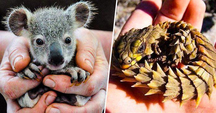 Conjunto de 25 fotos de hermosos animales bebés que te harán querer tener uno. Todos son bebes del reino animal y te derretirán el corazon
